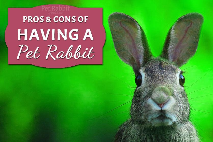 Having a pet rabbit