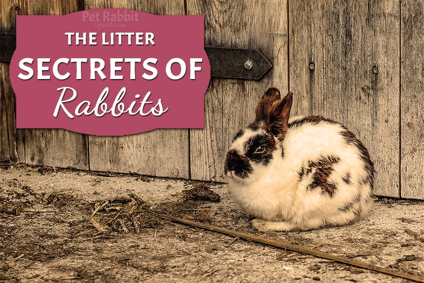 How To Take Care Of Your Rabbit's Litter