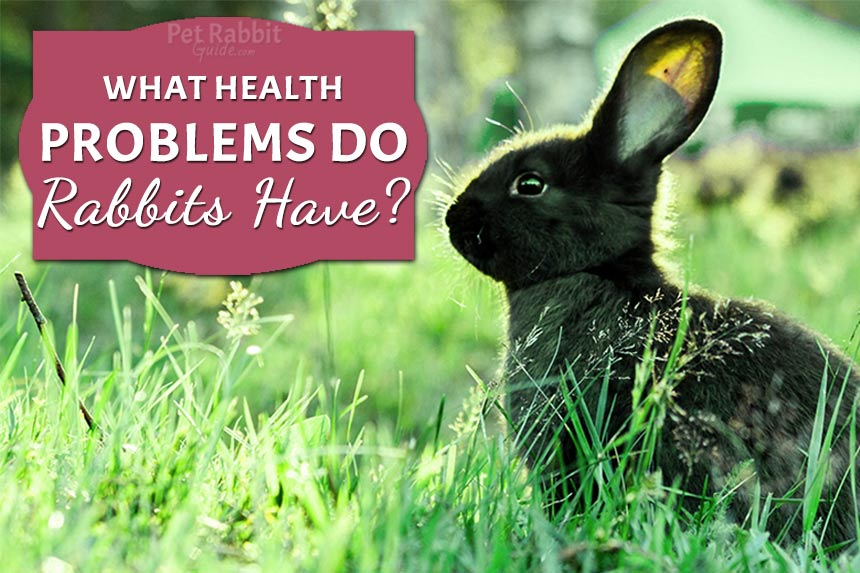 What Health Problems do Rabbits Have?
