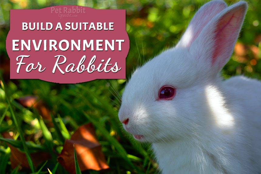 Suitable environment for rabbits